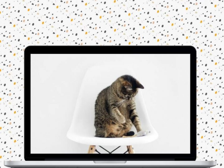 Creating a new website for Bristol & Wales Cat Rescue